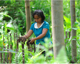 FARMING SOLUTIONS WITH MULTIPLE BENEFITS FOR BIODIVERSITY